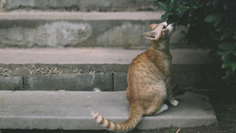 La moda del marketing olfativo foto gato oliendo planta
