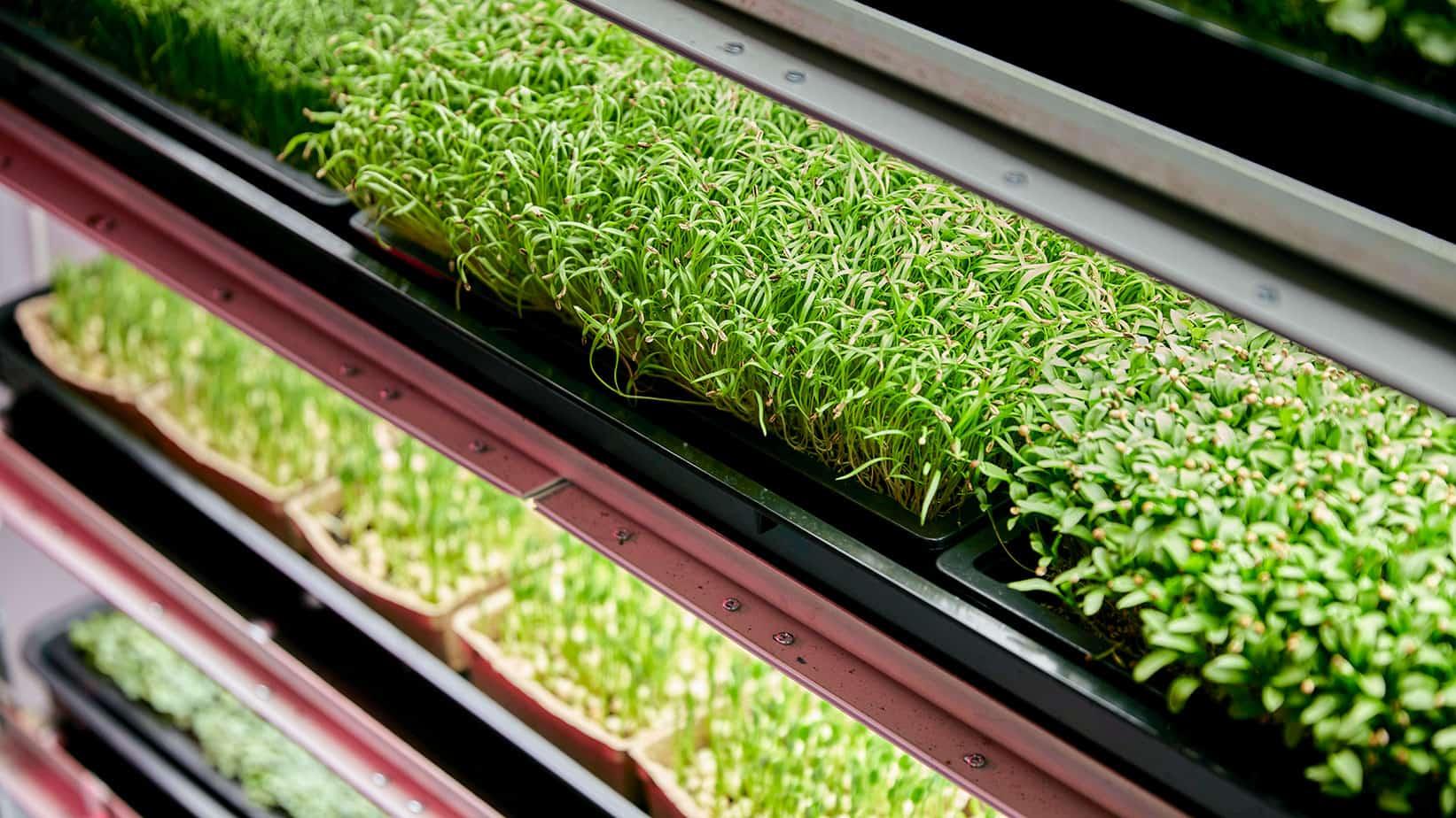Fábrica de vegetales, el negocio del futuro. Blog carlcaesar